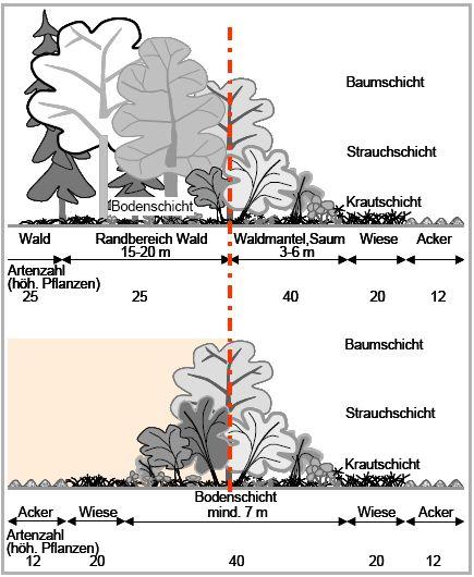 Ganz und zu Extrem Naturschutzbüro Zollernalb e.V. - Hecken-Hintergrundwissen @CG_94